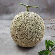 프레시벨리 달콤하고 맛있는 왕메론 2통 3kg이상