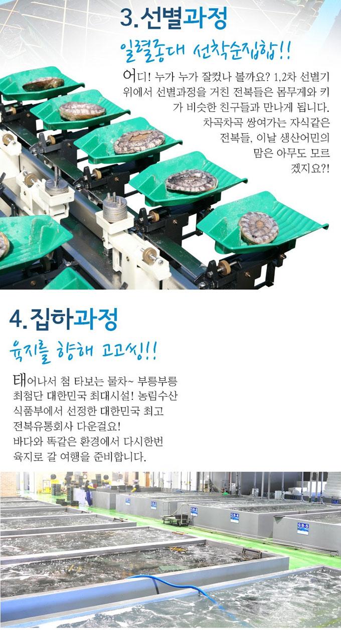 활전복 상품설명3
